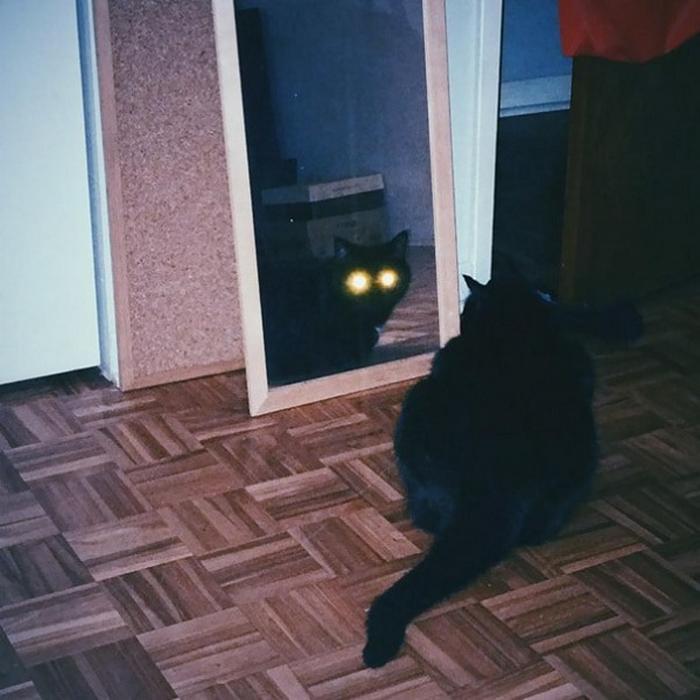 27 provas de que os gatos são demônios 27