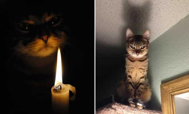 27 provas de que os gatos são demônios 9