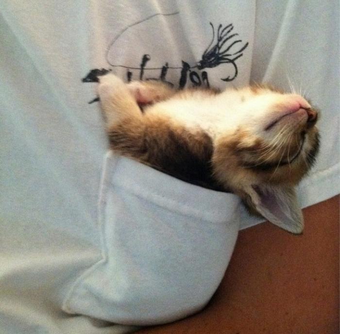 20 gatos desajeitados que adormeceram em maneiras loucas 5
