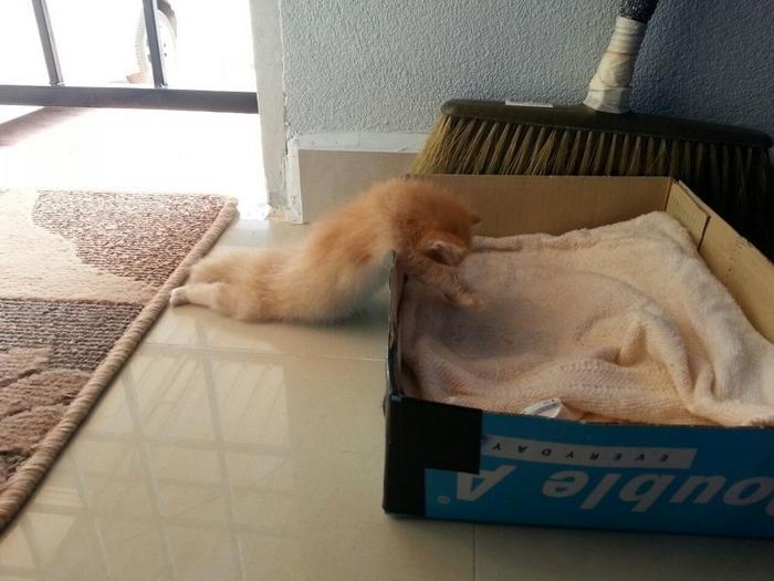 20 gatos desajeitados que adormeceram em maneiras loucas 7
