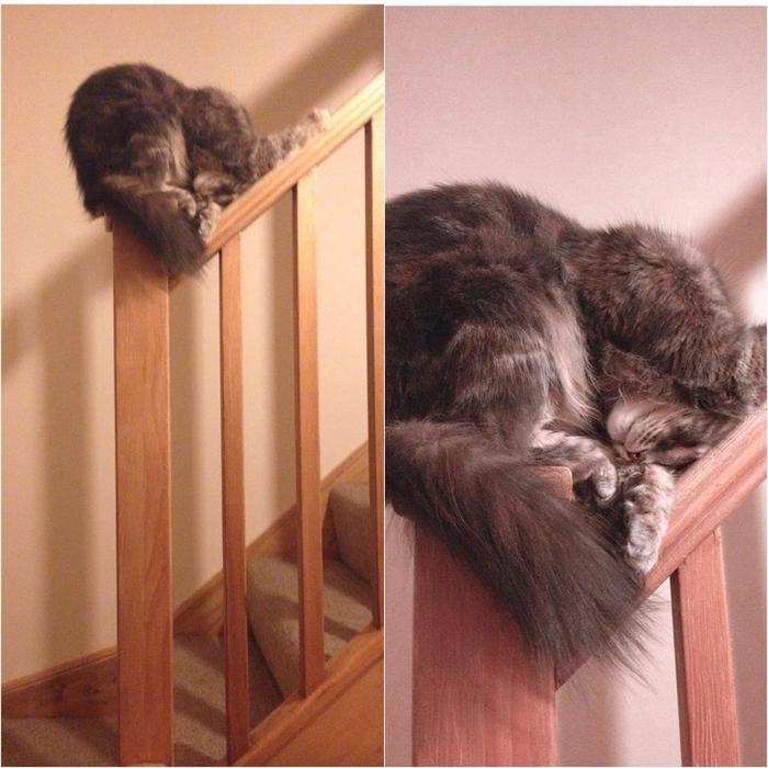 20 gatos desajeitados que adormeceram em maneiras loucas 8