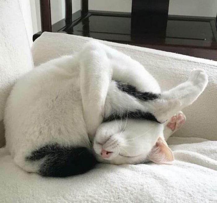 20 gatos desajeitados que adormeceram em maneiras loucas 10
