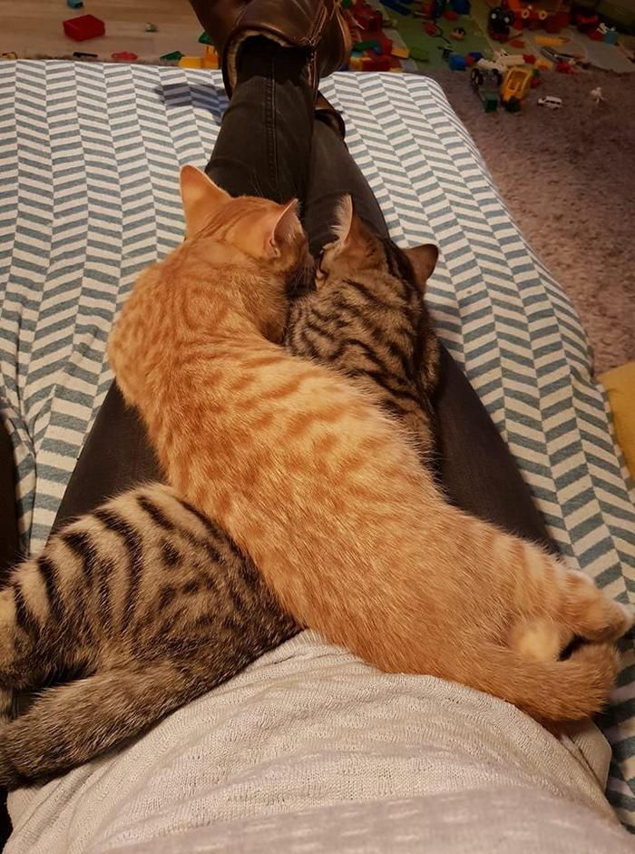 20 gatos desajeitados que adormeceram em maneiras loucas 14