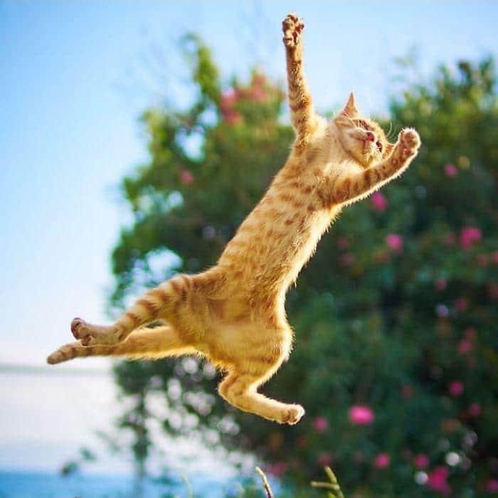 36 das mais divertidas fotos de gatos dançando 3