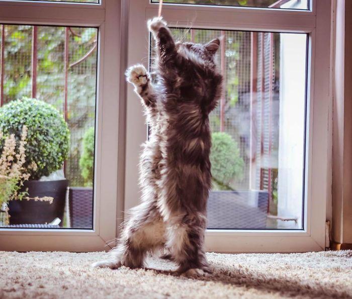 36 das mais divertidas fotos de gatos dançando 5