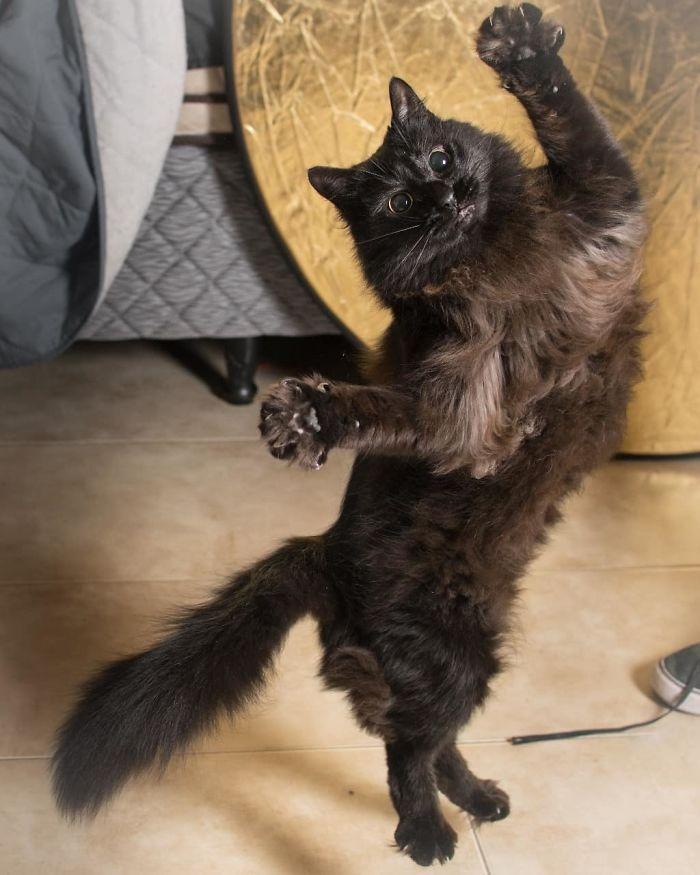 36 das mais divertidas fotos de gatos dançando 6
