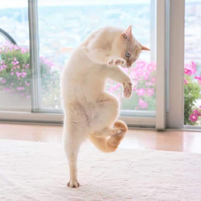 36 das mais divertidas fotos de gatos dançando 7