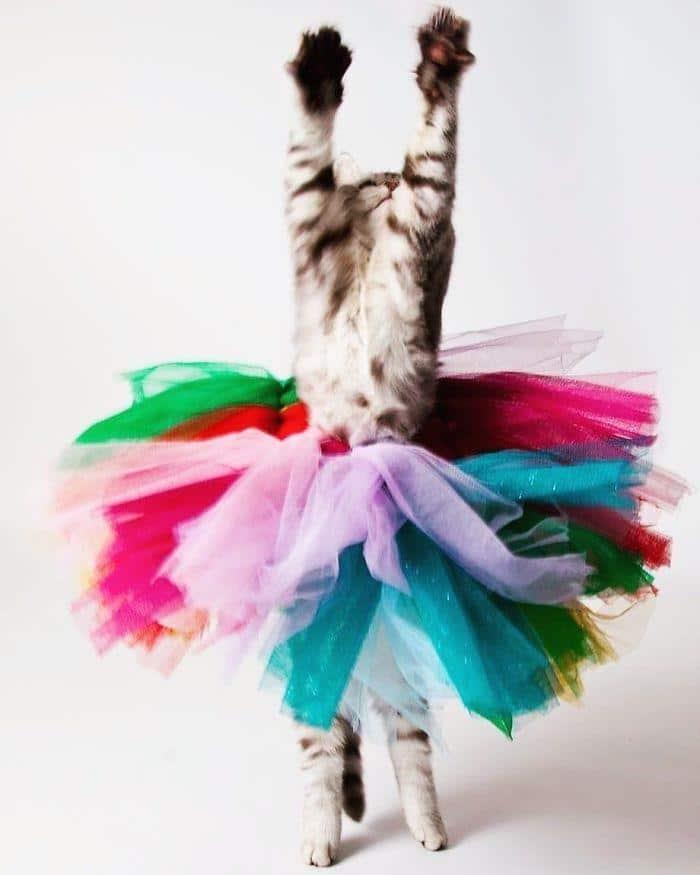 36 das mais divertidas fotos de gatos dançando 8