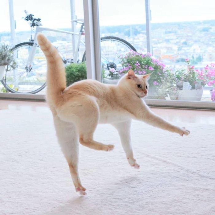 36 das mais divertidas fotos de gatos dançando 9