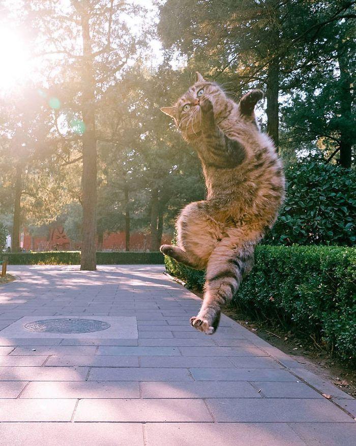 36 das mais divertidas fotos de gatos dançando 11