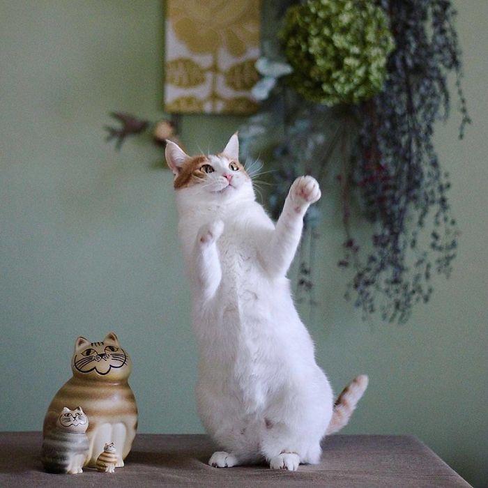 36 das mais divertidas fotos de gatos dançando 12