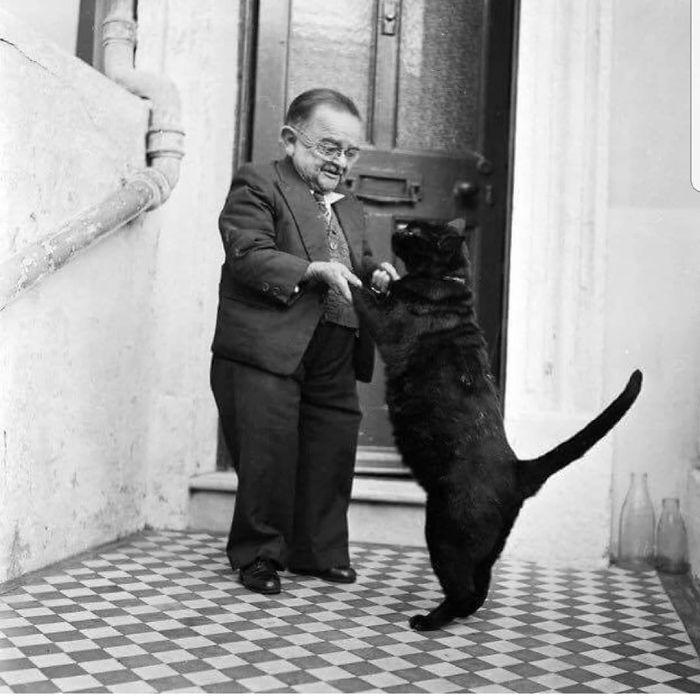 36 das mais divertidas fotos de gatos dançando 13