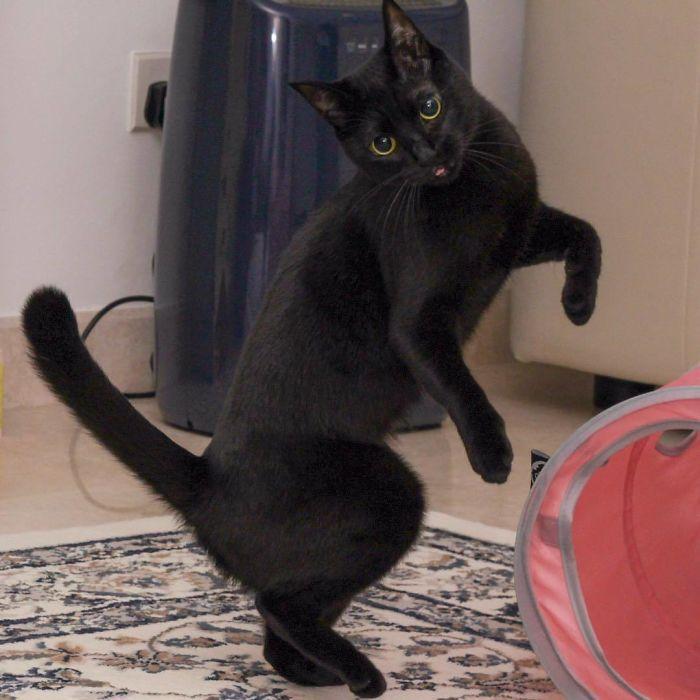 36 das mais divertidas fotos de gatos dançando 14
