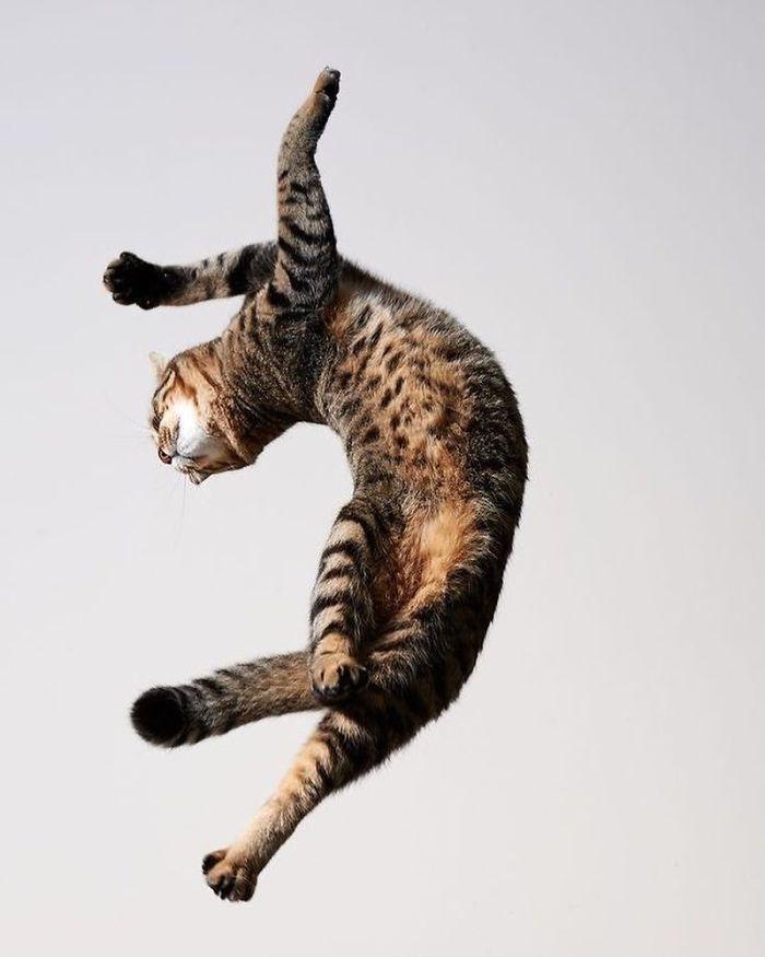 36 das mais divertidas fotos de gatos dançando 15