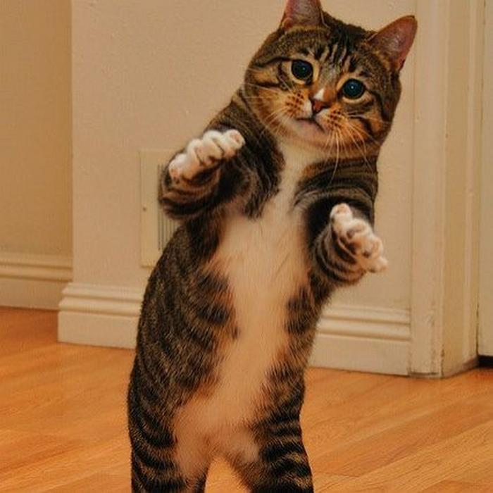 36 das mais divertidas fotos de gatos dançando 17