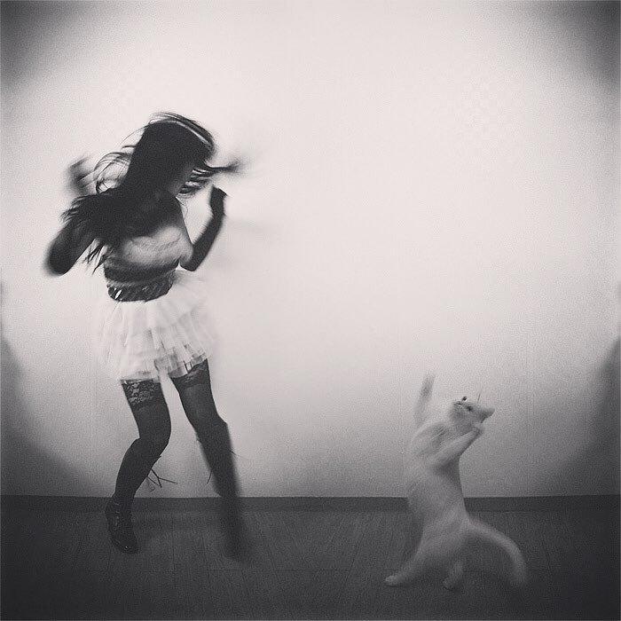 36 das mais divertidas fotos de gatos dançando 18