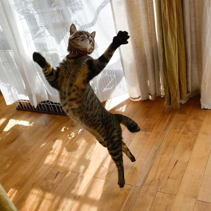 36 das mais divertidas fotos de gatos dançando 19