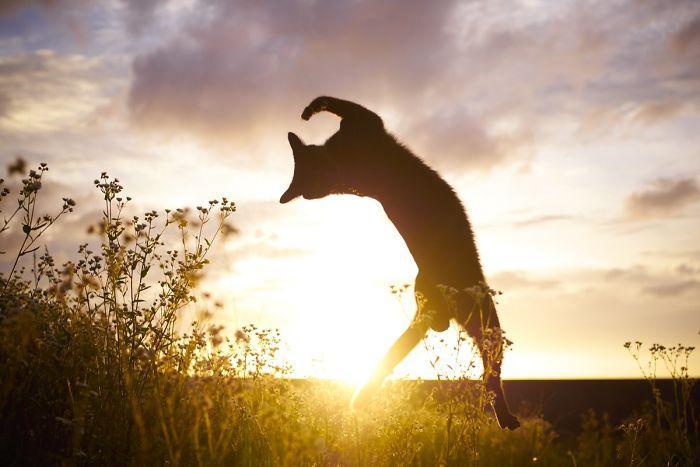 36 das mais divertidas fotos de gatos dançando 21