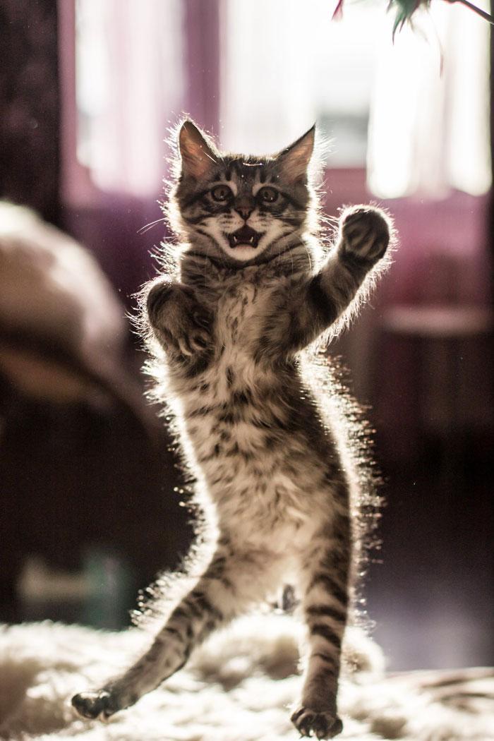 36 das mais divertidas fotos de gatos dançando 22