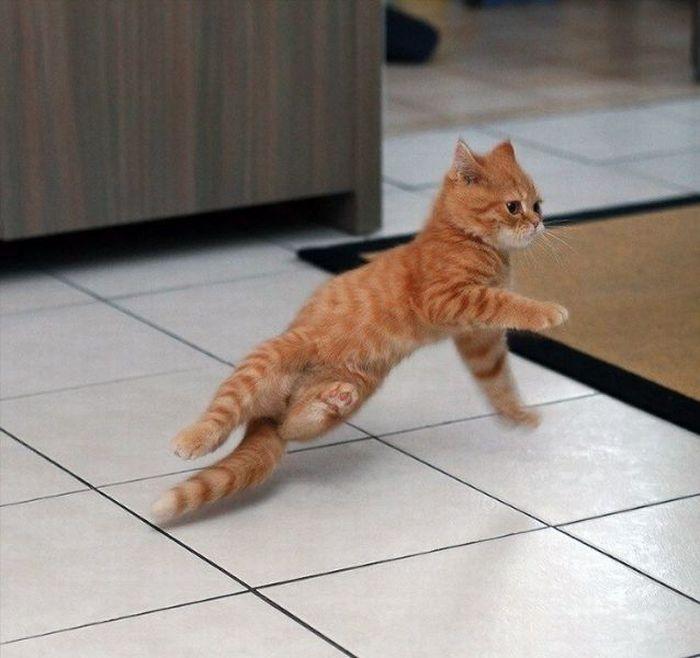 36 das mais divertidas fotos de gatos dançando 23