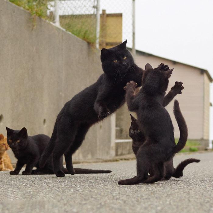 36 das mais divertidas fotos de gatos dançando 25