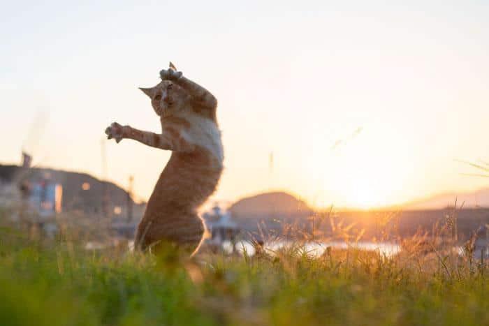36 das mais divertidas fotos de gatos dançando 26