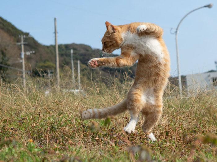 36 das mais divertidas fotos de gatos dançando 27
