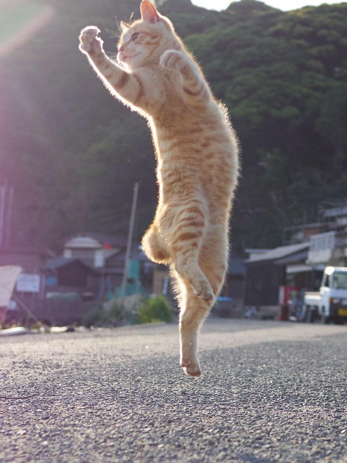 36 das mais divertidas fotos de gatos dançando 28