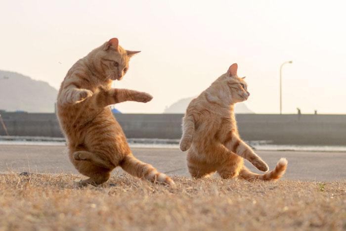 36 das mais divertidas fotos de gatos dançando 30