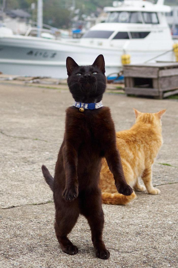 36 das mais divertidas fotos de gatos dançando 31