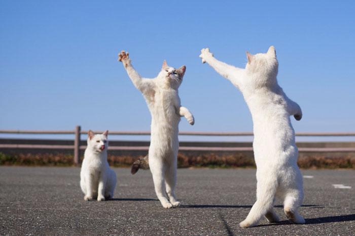 36 das mais divertidas fotos de gatos dançando 32