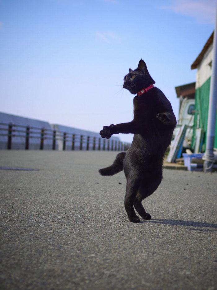 36 das mais divertidas fotos de gatos dançando 33