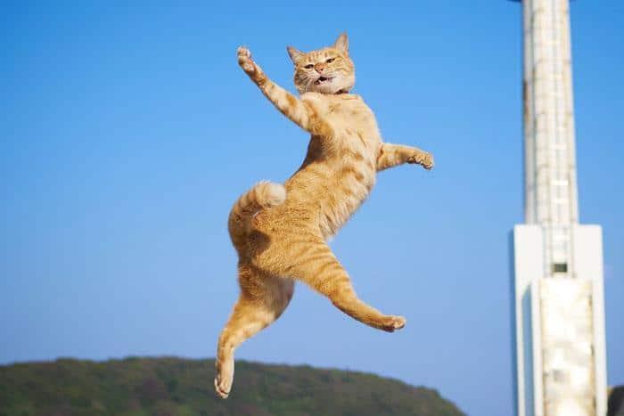 36 das mais divertidas fotos de gatos dançando 34