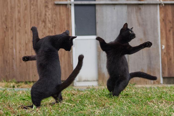36 das mais divertidas fotos de gatos dançando 35