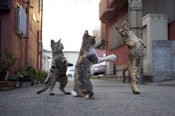 36 das mais divertidas fotos de gatos dançando 36