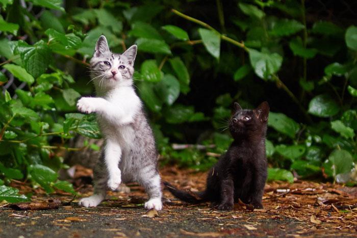 36 das mais divertidas fotos de gatos dançando 37