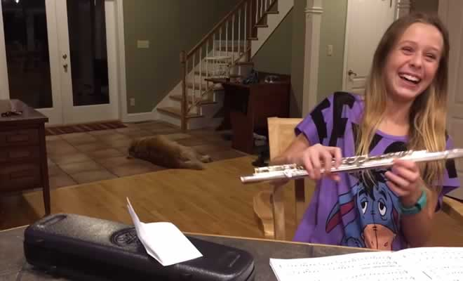 Garota tenta tocar flauta, mas o cachorro faz a internet morrer de rir 2