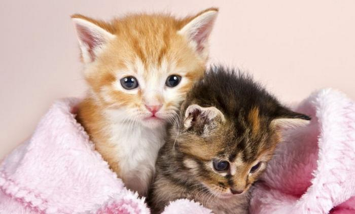 10 motivos para adotar dois gatos ao invés de um 2
