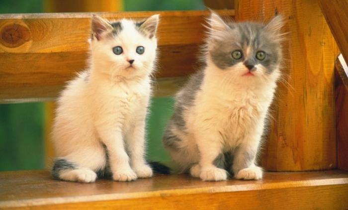 10 motivos para adotar dois gatos ao invés de um 4