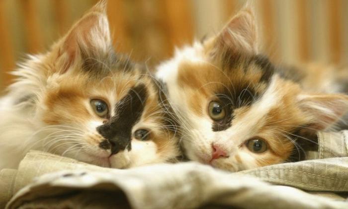 10 motivos para adotar dois gatos ao invés de um 5