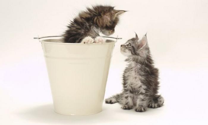 10 motivos para adotar dois gatos ao invés de um 6