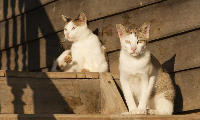 10 motivos para adotar dois gatos ao invés de um 8