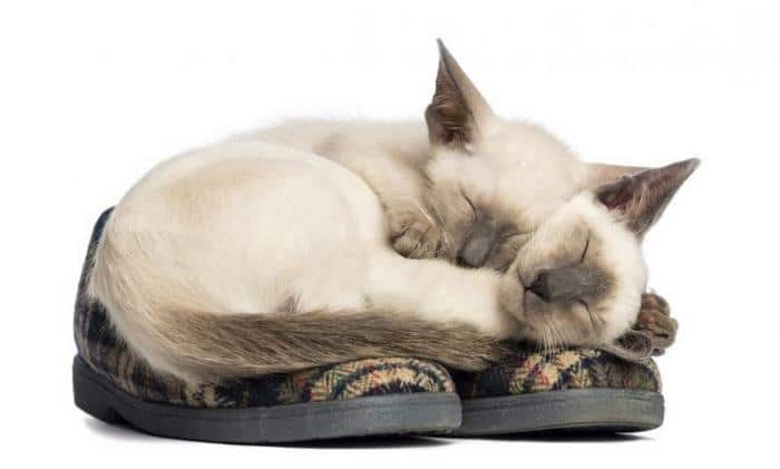 10 motivos para adotar dois gatos ao invés de um 9
