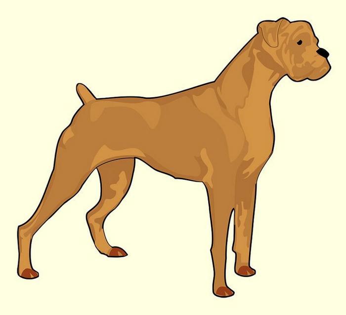 O primeiro animal que você enxergar revelará suas características mais intensas 6