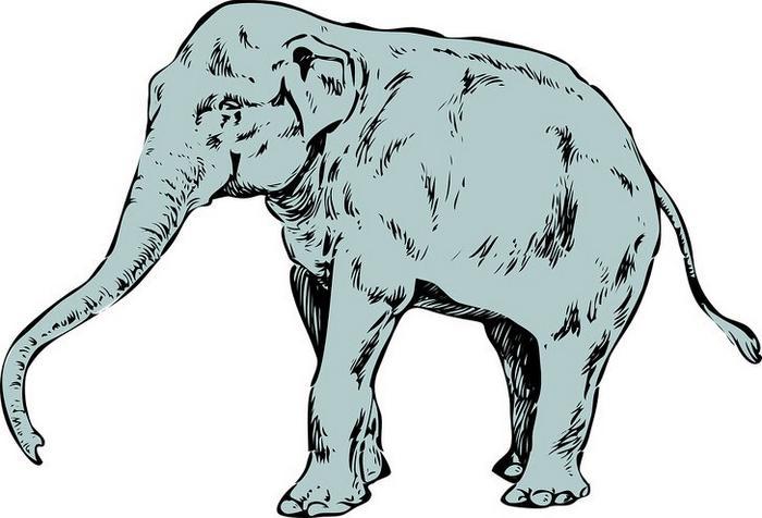 O primeiro animal que você enxergar revelará suas características mais intensas 7