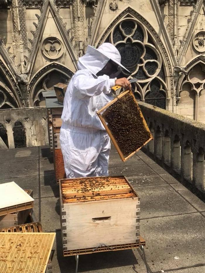 13 segredos ocultos na Catedral de Notre-Dame 8