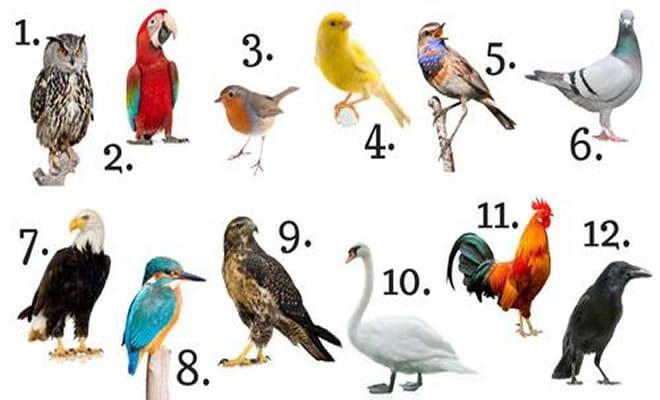 O que a ave do seu mês diz a seu respeito?