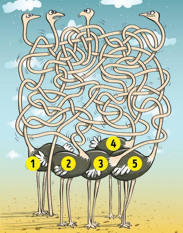 Desafio da visão de águia, faça esse teste genial e descubra 19