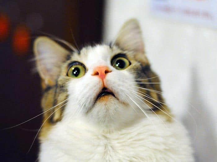 18 gatos excessivamente dramáticos 6