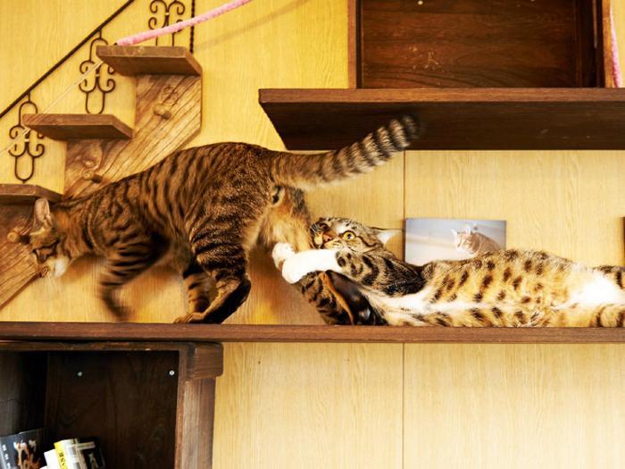 18 gatos excessivamente dramáticos 9